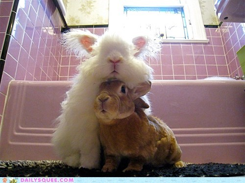 bunny chin rest cuddles Fluffy friends happy bunday rabbit - 6570516224