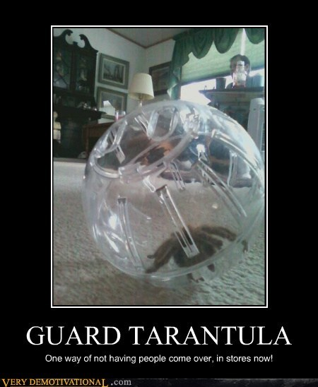 creepy guard spider tarantula wtf - 6570718720