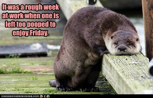 otter,rough week,FRIDAY,pooped,tired
