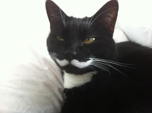 its-caturday,moustaches