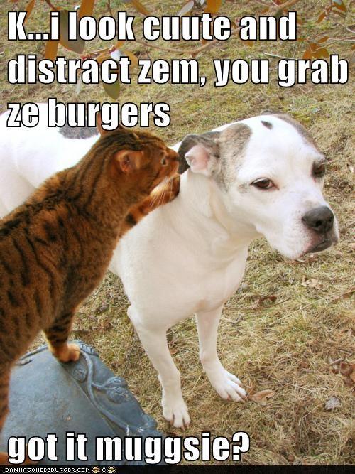 Cheezburger Image 6570999040