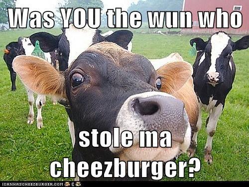 Cheezburger Image 6571232256
