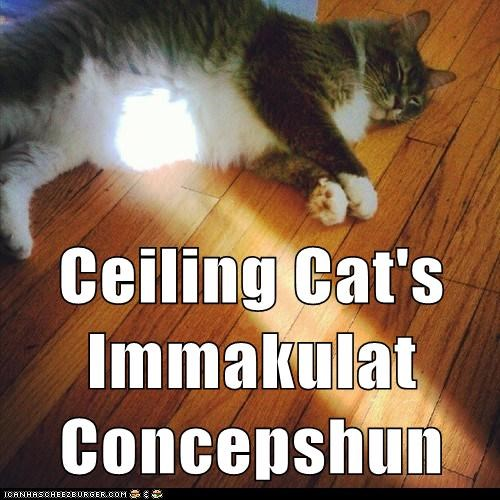 captions Cats ceiling cat immaculate conception light pregnant sunbeam sunbeams tummy - 6571289088