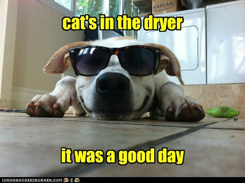 dogs,what breed,dryer,cat,sunglasses,good day,revenge