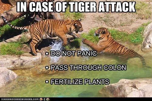 attack,fertilize,instructions,pants,poop,scared,tiger