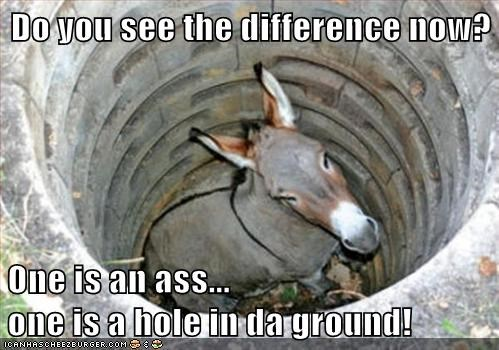 ass,difference,donkey,expression,hole in the ground,stupid