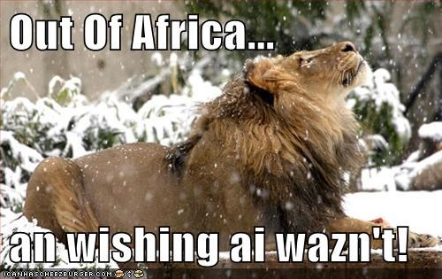 lion africa wishing not snow cold out of Africa - 6571566848