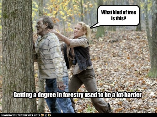 degree,forestry,harder,headbutt,smash,tree,The Walking Dead,zombie