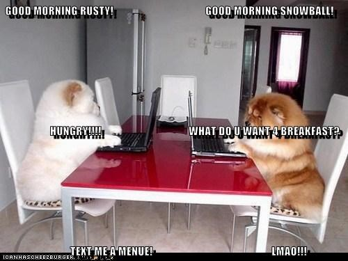 GOOD MORNING RUSTY! GOOD MORNING SNOWBALL! HUNGRY!!!! WHAT DO U WANT 4 BREAKFAST? TEXT ME A MENUE!