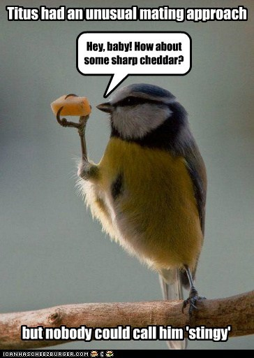 bird unusual mating cheddar flirting cheese pun money - 6571925760