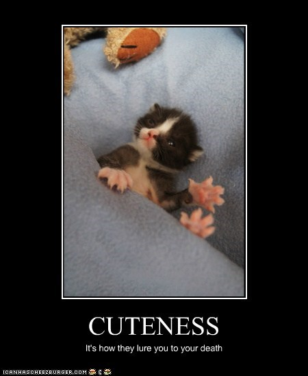 CUTENESS It's how they lure you to your death