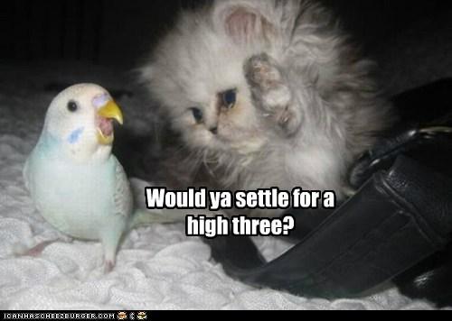 bird cat high five kitten parakeet skin small three - 6572181248