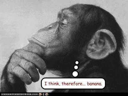 banana chimpanzee i think therefore i am philosophy rené descartes - 6572251392
