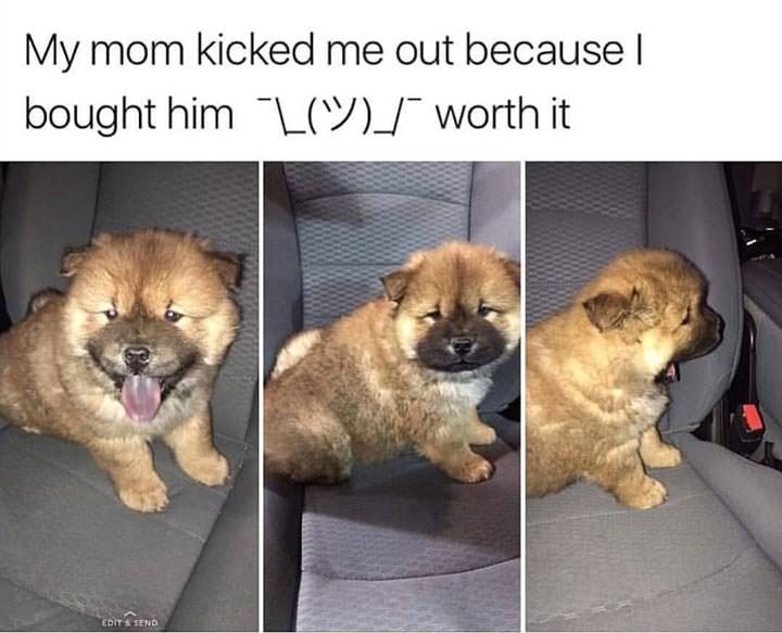 dog memes funny memes animal memes animals cat memes - 6572293