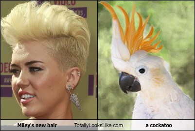 Miley's new hair Totally Looks Like a cockatoo