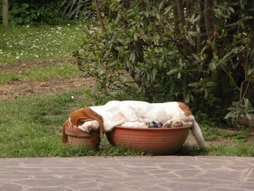 its-sundog lazy - 6572785920