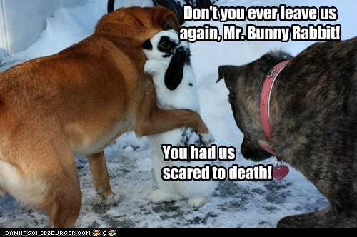bunny dogs dont-leave hug rabbit scared - 6572836864