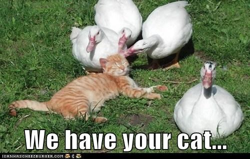 birds captions cat ducks hostage - 6572857600