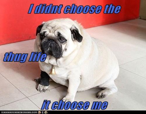 Cheezburger Image 6572918528