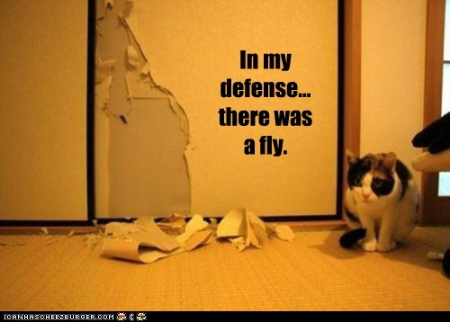captions Cats defense destroy destruction flies fly shred wall wallpaper