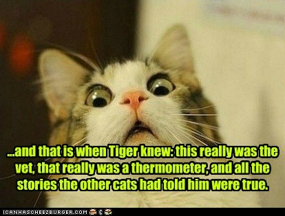 ...and that is when Tiger knew: this really was the vet, that really was a thermometer, and all the stories the other cats had told him were true.