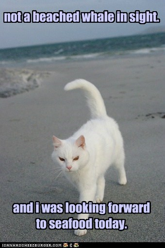 beach,captions,Cats,noms,ocean,seafood,whale