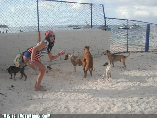 Animal Bomb,beach,dogs,humping,sneaky,whoops