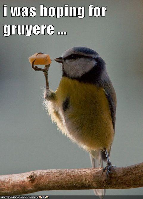 bird cheese eating hoping - 6573782528