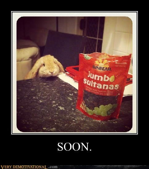 hungry,rabbit,raisins,SOON