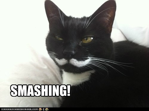 captions Cats chap fancy gentleman lolcats mustache mustaches smashing - 6574164992
