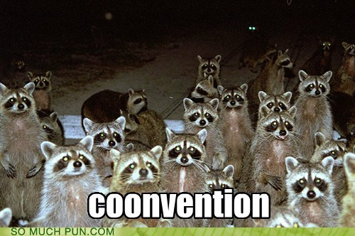 convention,coon,gathering,literalism,prefix,raccoon,similar sounding,slang