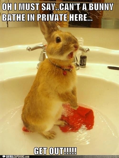 bunny,bath,private,get out,startled,bathing