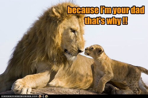 arguments,cub,dad,kids,lions,parenting,son