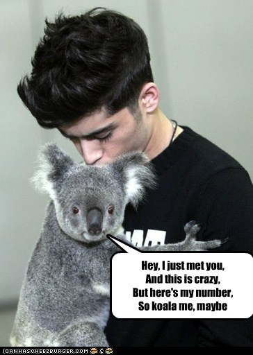 and this is crazy call me maybe carly rae jepsen hey i just met you koala parody pun song