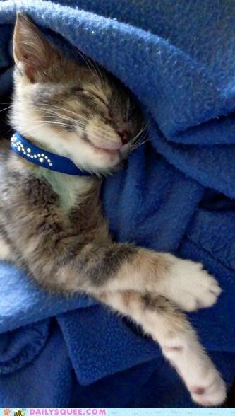cat kitten pet reader squee sleeping - 6574641920