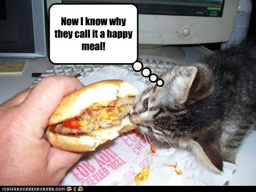 Cheezburger Image 6574722816