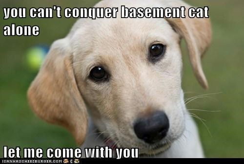 you can't conquer basement cat alone let me come with you