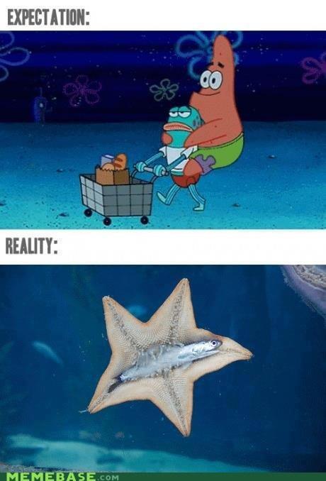 anchovy patrick SpongeBob SquarePants starfish - 6575240448