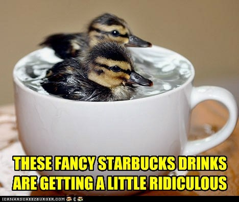 coffee,drinks,ducklings,fancy,ridiculous,Starbucks,swimming