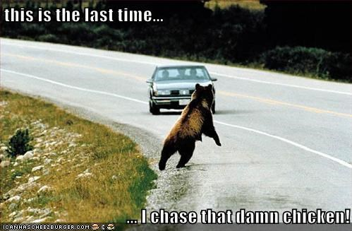 bear,car,chicken,crossing the road,hit,last time,scared