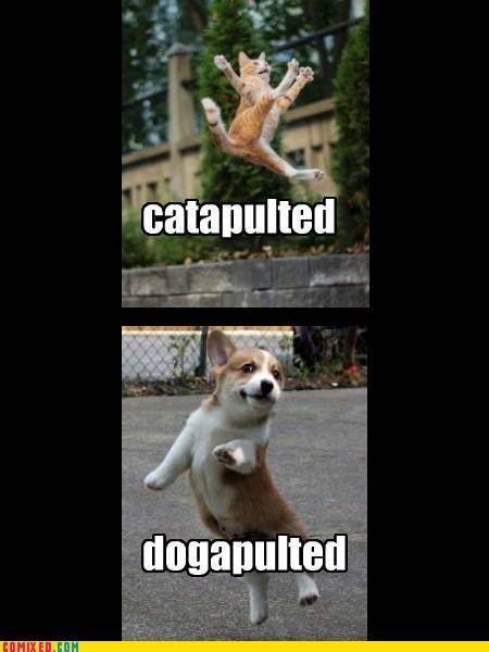 never mind catapult dogs pets raining