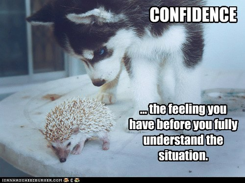 confidence,dogs,feeling,hedgehog,lesson,situation,sniffing,understand