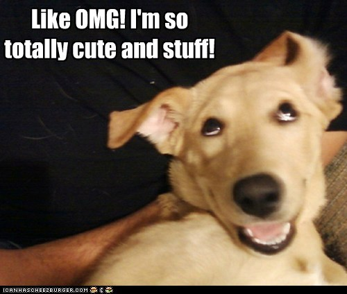 dogs lab omg cute valley girl confident - 6576109056