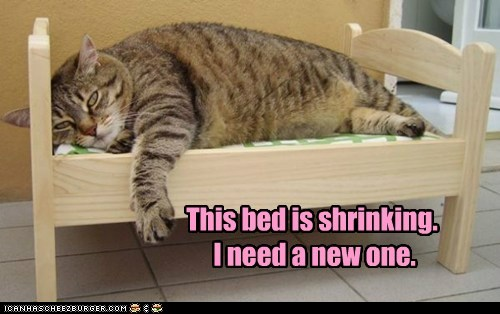 This bed is shrinking. I need a new one.