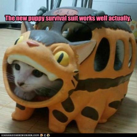captions,catbus,Cats,dogs,survival,survival suit,totoro