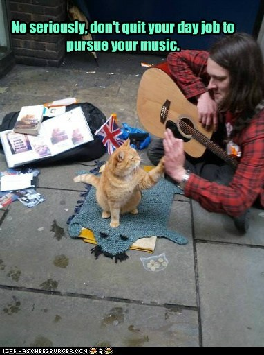 busker busking captions career Cats day job employment guitar job Music quit - 6576227584