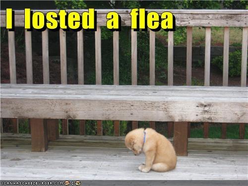 puppy sad dog - 6576324608