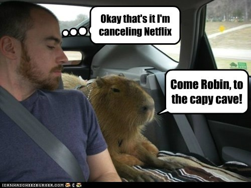 batcave batman capybara netflix obsessed robin - 6576360704
