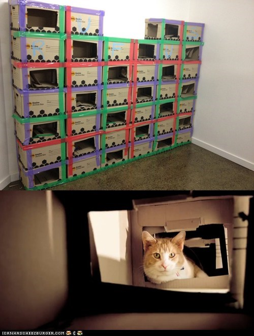 boxes,castle,cat,DIY,the daily what,Video