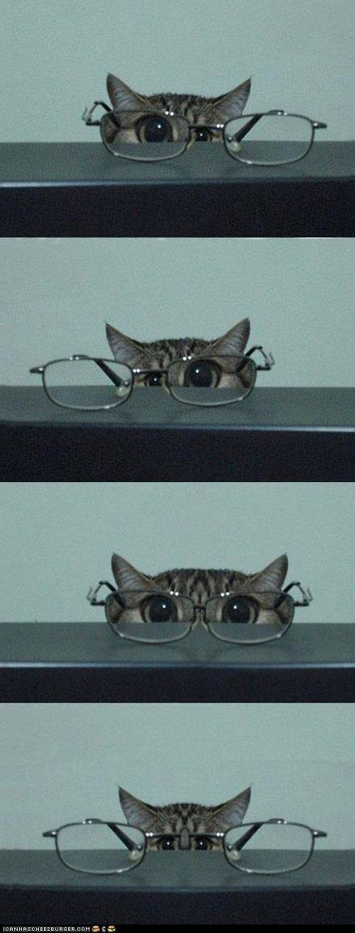 angle,cat,confused,glasses,lens,looking,perspective,silly,view,warp